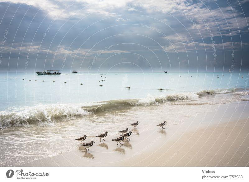 familientag Ferien & Urlaub & Reisen Sommer Sonne Meer Landschaft Strand Ferne Küste Vogel Wellen Tourismus Insel Ausflug Tiergruppe Lebensfreude Sommerurlaub