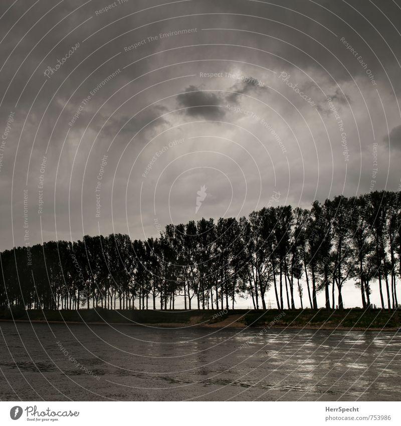 Am Labe-Ufer Natur Landschaft Himmel Wolken Gewitterwolken schlechtes Wetter Sturm Regen Baum Grünpflanze Flussufer Elbe Tschechien bedrohlich kalt grau