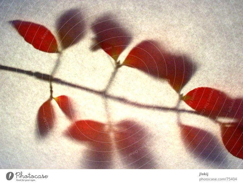 Schattenwand rot Blatt Herbst Ast Zweig Vignettierung verwaschen