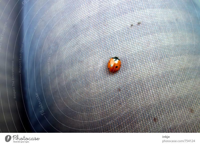der rote Punkt Beine Strumpfhose Käfer Marienkäfer 1 Tier krabbeln Freundlichkeit klein nah niedlich Gefühle Lebensfreude Vertrauen Sicherheit Sympathie