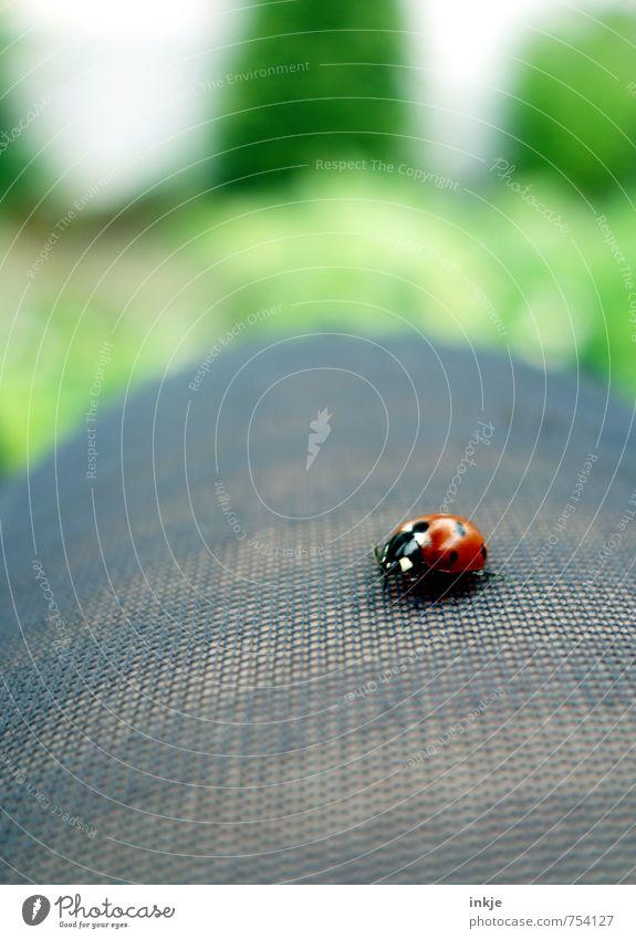 Punktlandung Lifestyle Freizeit & Hobby Beine 1 Mensch Tier Käfer Marienkäfer hocken krabbeln sitzen schön klein natürlich Neugier niedlich grün rot Gefühle