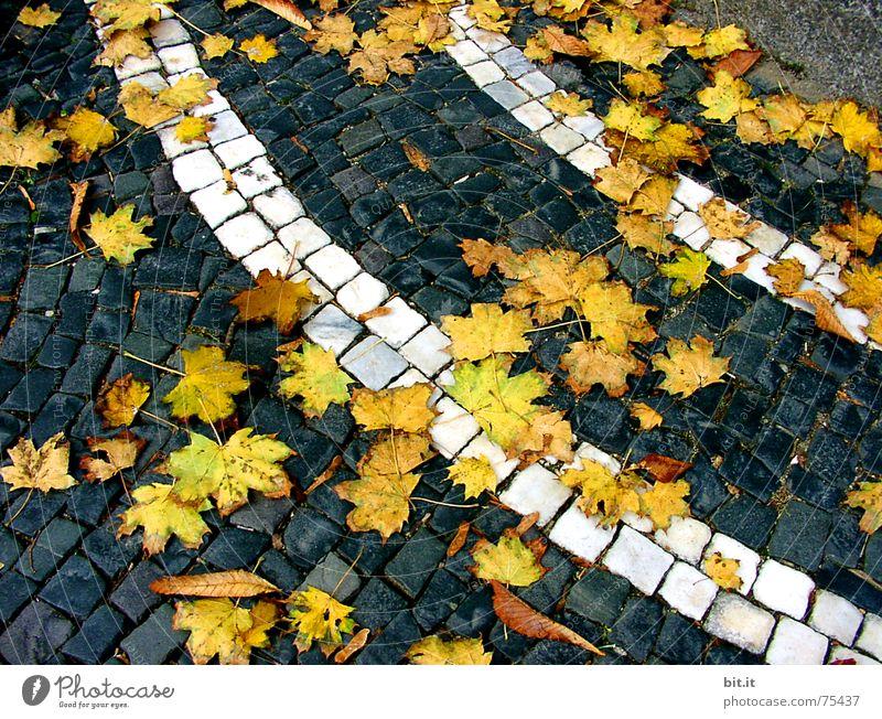 WIND><STILL Blatt gelb Straße Herbst Wege & Pfade Stein Kunst Stimmung Wind Klima nass Streifen Wandel & Veränderung rund Sturm Verkehrswege