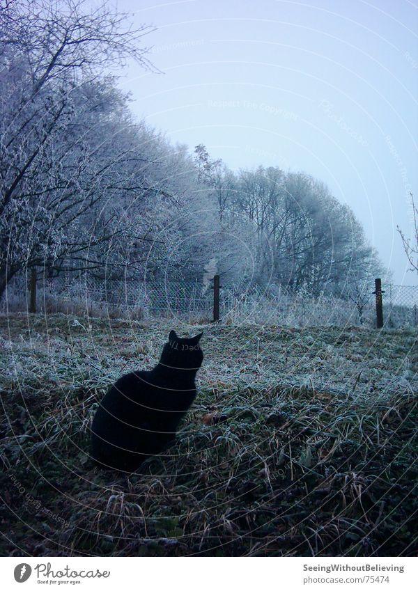 LONELY CAT Baum Winter ruhig kalt Wiese Katze