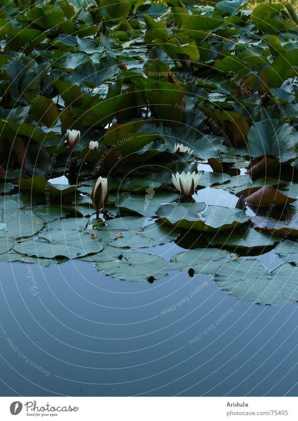 natur_01 Himmel Natur blau Pflanze grün Sommer Wasser Erholung Blume Blatt ruhig Wolken dunkel Blüte Gefühle Gras