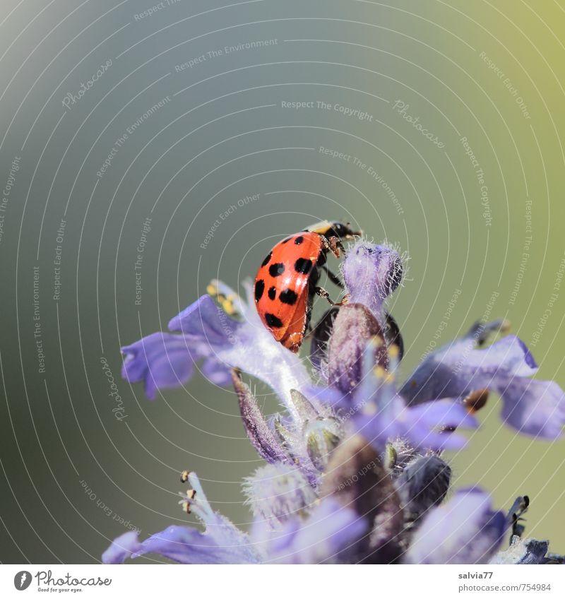 Sonnenbad Erholung ruhig Duft Umwelt Natur Pflanze Tier Frühling Sommer Schönes Wetter Blüte Wildpflanze Garten Wiese Wildtier Käfer 1 berühren Blühend krabbeln