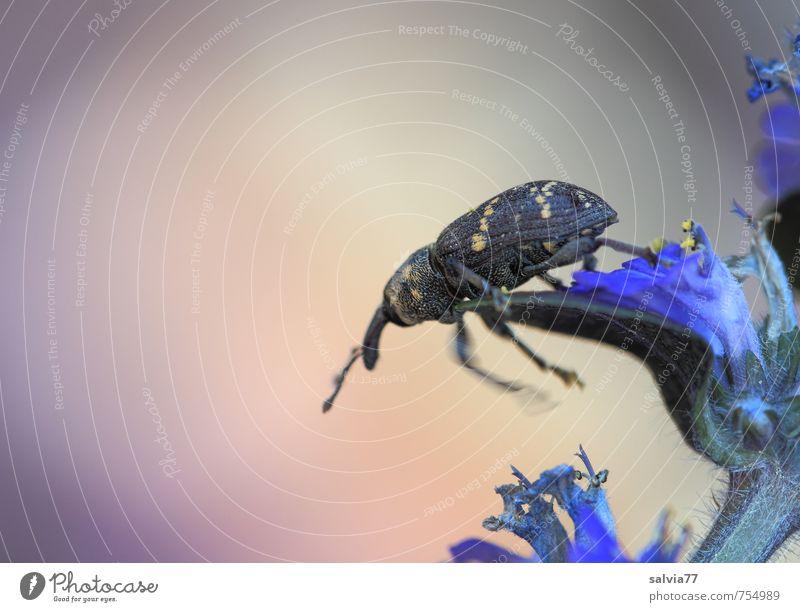 hoppala! Umwelt Natur Pflanze Tier Frühling Sommer Blume Blüte Wildpflanze Garten Wiese Wildtier Käfer 1 Bewegung Blühend Duft entdecken fallen krabbeln