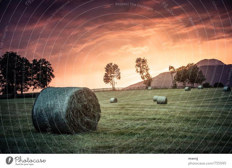 Erntedankfest | Schnell noch vor dem Unwetter! Landwirtschaft Natur Landschaft Himmel Wolken Gewitterwolken Horizont Sonnenaufgang Sonnenuntergang Sommer Herbst
