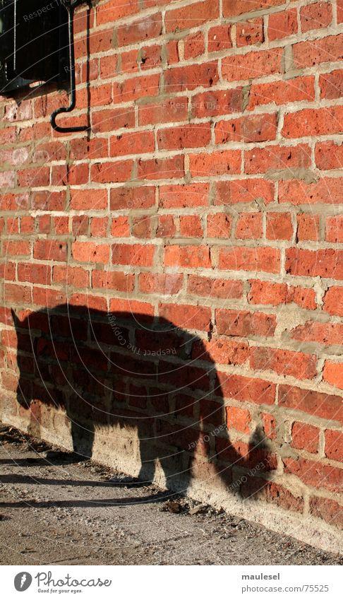 der böse wolf Graffiti Mauer Hund Angst Backstein Anlegestelle Schrecken Märchen Wolf Brooklyn Rotkäppchen Werwolf Rassehund