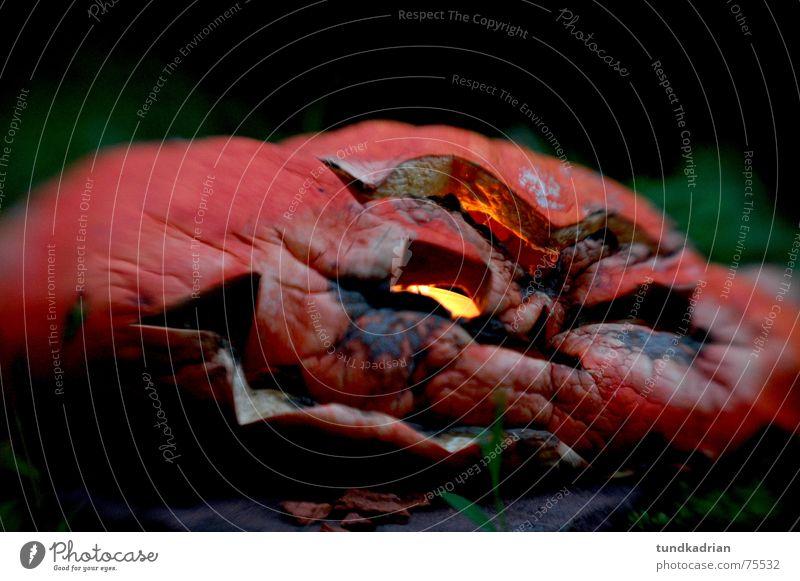 Kopfweh Halloween matschig kaputt Außenaufnahme Kürbis verdorben alt verfallen Verfall ungenießbar Verwesung verfaulen Makroaufnahme Bildausschnitt Anschnitt
