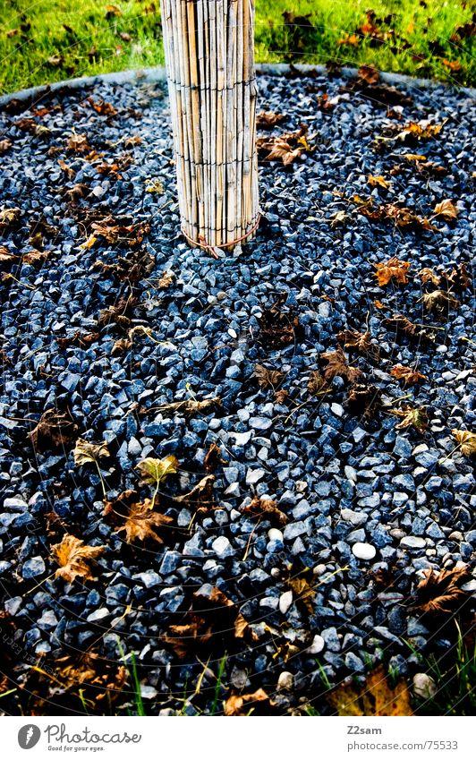 esoterik patch Esoterik Kies Holz Baum Wachstum Herbst Blatt grün Wiese Gras Natur Stein Bambusrohr Baumstamm Farbe