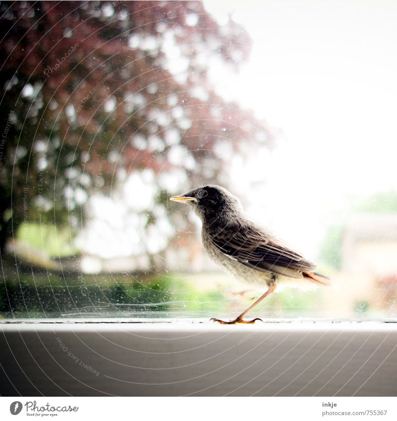 kleines Hausrotschwänzchen Natur Stadt Pflanze Sommer Baum Tier Fenster Umwelt Tierjunges Gefühle Frühling Garten Vogel Park Schönes Wetter