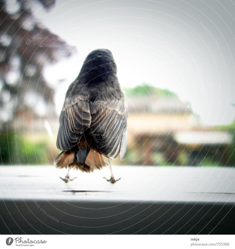 lass mich frei!! Natur Sommer Baum Tier Fenster Umwelt Tierjunges Gefühle Frühling klein Freiheit Garten springen Vogel Park Wildtier