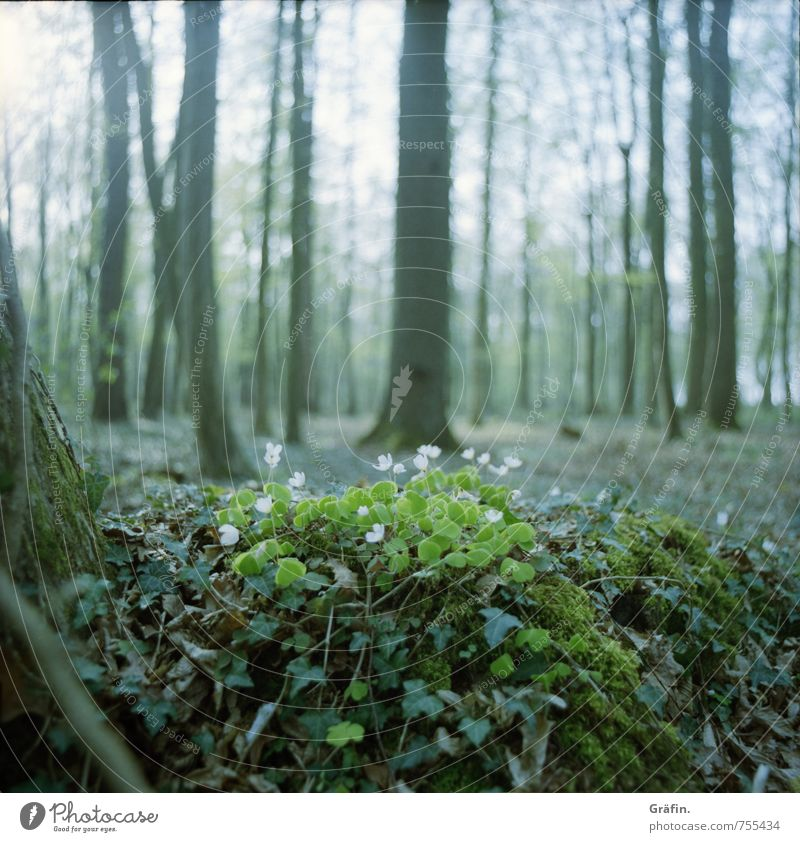 Frisches Grün Umwelt Landschaft Erde Frühling Baum Blume Gras Sträucher Moos Grünpflanze Wildpflanze Wald Blühend entdecken Wachstum grün Frühlingsgefühle