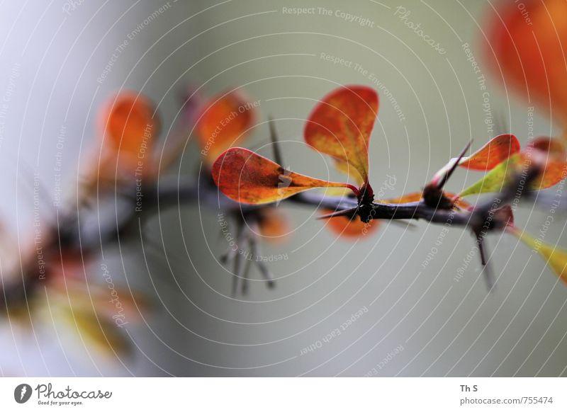 Pflanze Natur Blühend ästhetisch authentisch einfach elegant natürlich Gelassenheit geduldig ruhig Blatt mehrfarbig harmonisch schön Farbe Farbfoto