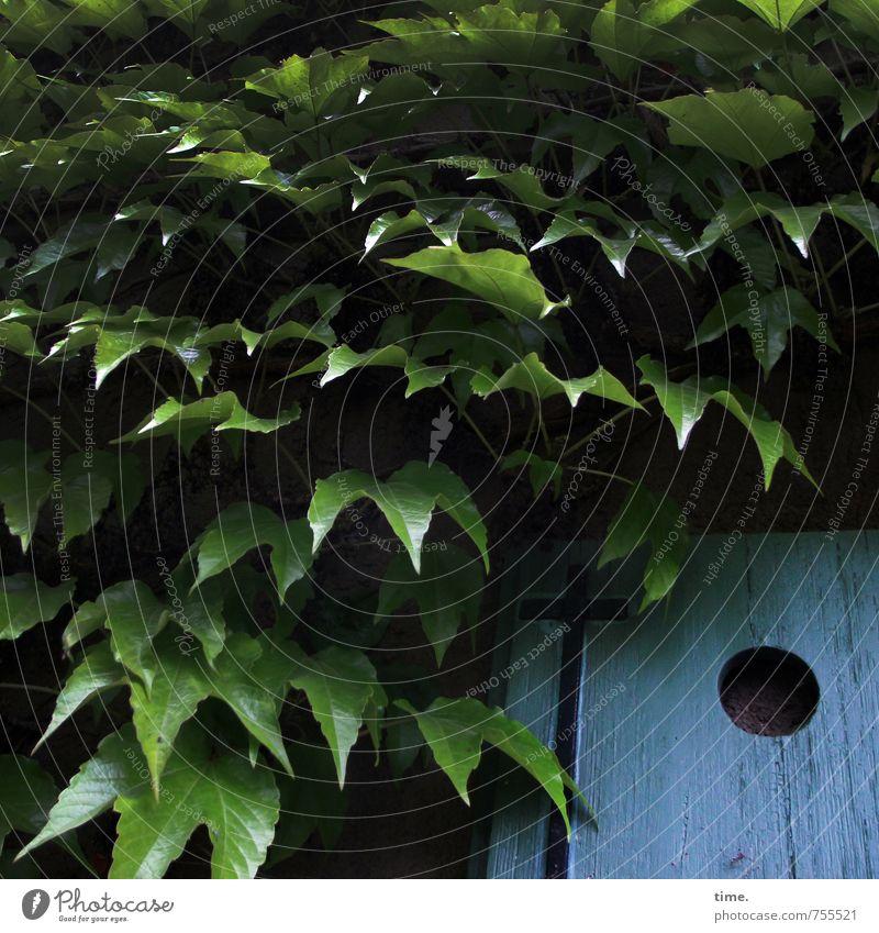 Flughafen Pflanze Blatt Grünpflanze Wein Traumhaus Nistkasten Holz Loch dunkel einfach blau grün Nostalgie Dienstleistungsgewerbe Sicherheit verstecken Versteck