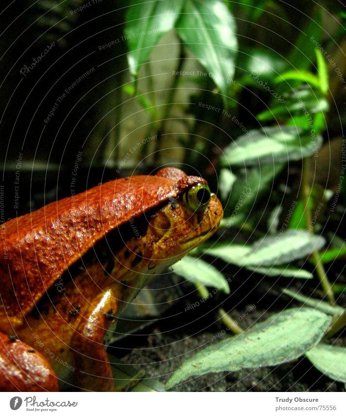 now look at me Tier Terrarium Aquarium Zoo Tiergarten Wassertier Blatt gefangen Haftstrafe eingeschlossen Sozialismus rot geschöpf Frosch Gemüse kriechtierhaus
