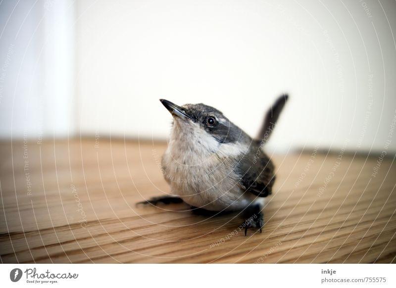 ...tschilp?... Menschenleer Holzfußboden Tier Wildtier Vogel 1 Tierjunges hocken Blick sitzen warten Neugier niedlich Gefühle Vertrauen Interesse entdecken