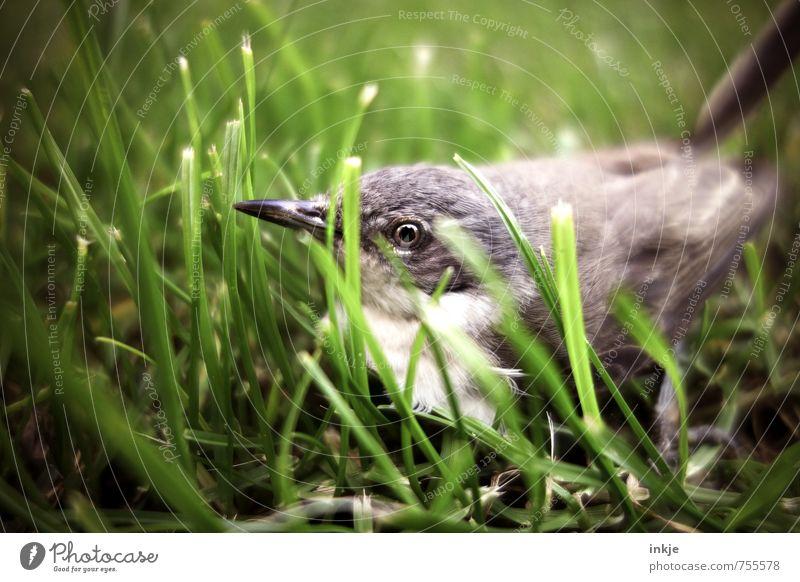 ....mama?.... Tier Frühling Sommer Gras Garten Wiese Wildtier Vogel 1 Tierjunges hocken warten klein grün Gefühle Vertrauen Schutz Tierliebe achtsam Wachsamkeit