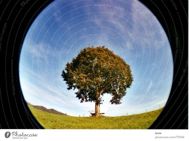 fast rund Cirrus Emmental Baum einzeln Einsamkeit Wiese grün Blatt Linde Hügel Baumkrone Sommer Herbst Spaziergang Verzerrung Lomografie Fischauge Himmel
