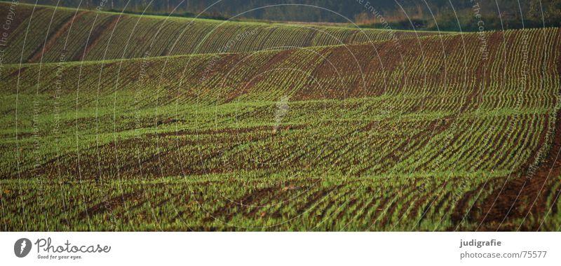 Feld grün Aussaat Hügel Wellen Landwirtschaft braun Ernte Linie Erde Bodenbelag