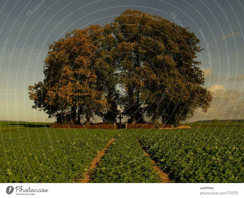 Goldener Oktober dunkel Feld Rücken Denkmal gerade erinnern zielstrebig Wäldchen Stoppelfeld