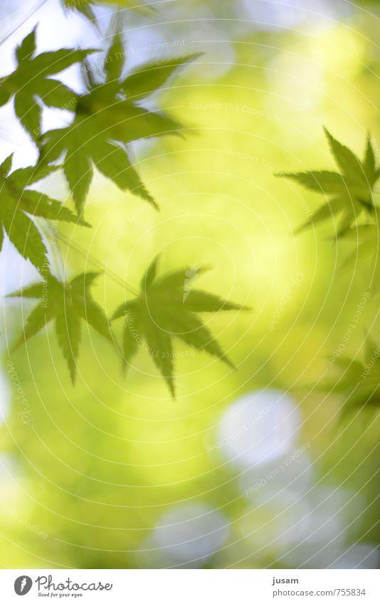Beglückendes Bäumchen Umwelt Natur Pflanze Sommer Schönes Wetter Hanf Blatt Grünpflanze Stimmung Glück Lebensfreude Warmherzigkeit Begierde Wollust Drogensucht
