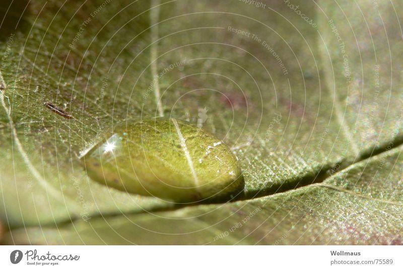 schluck wasser in der kurve Blatt grün nass feucht Wasser Wassertropfen Regen Natur Makroaufnahme