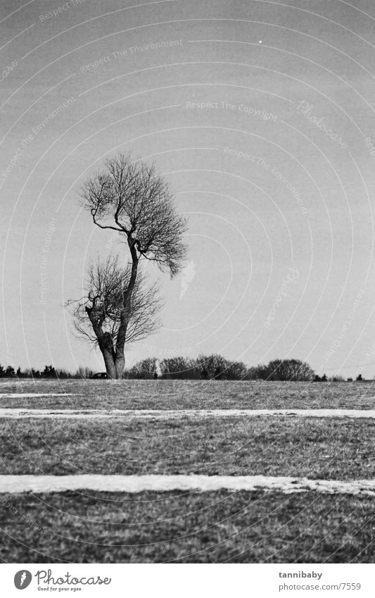 trist Baum Trauer Schwarzweißfoto Schnee Traurigkeit