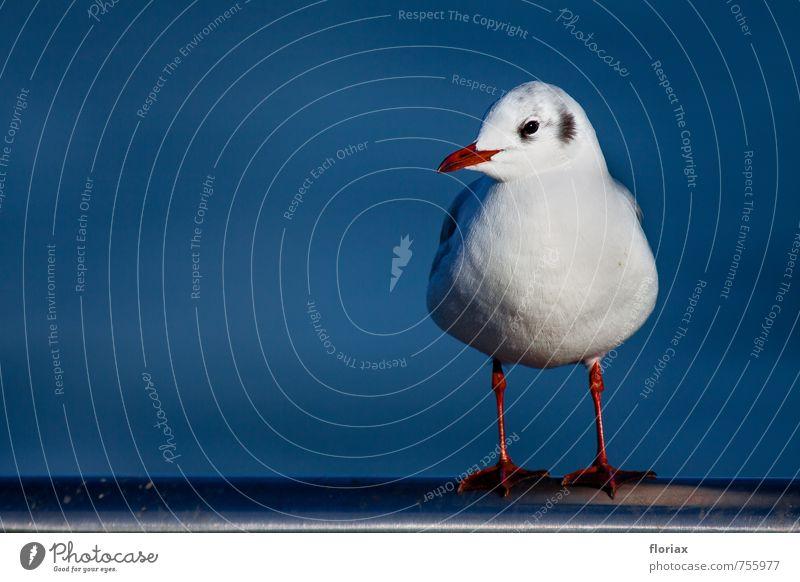 die möwe schaut sich um. Ferien & Urlaub & Reisen blau weiß rot Tier Auge Glück Vogel Zufriedenheit sitzen Wildtier stehen warten beobachten Feder Fluss