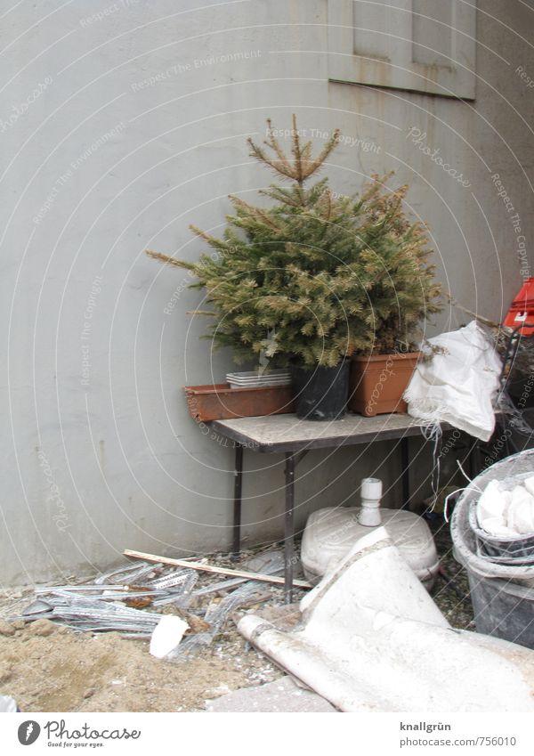 Schöne Bescherung! alt Stadt grün weiß Haus Wand Gefühle Mauer braun Garten Stimmung Fassade dreckig Häusliches Leben trist Tisch