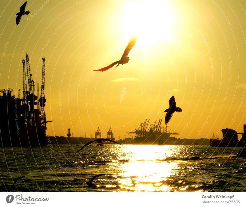 Nordish by Nature... Lifestyle Sommer Sonne Wellen Fähre Hafen Hamburg Kultur Wasser Schönes Wetter Wind Fluss Wasserfahrzeug Tier Möwe Vogel Tiergruppe Schwarm