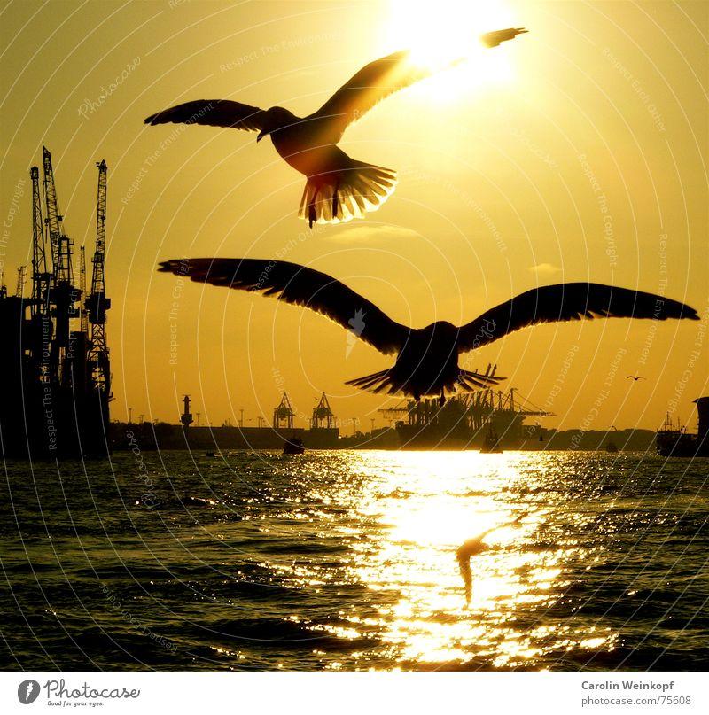 Hamburg City Lights... Kran Sehnsucht Zusammensein Angriff St. Pauli Abenddämmerung Sonnenuntergang Einsamkeit Trauer schön Anlegestelle Elbe Hafen fliegen fly