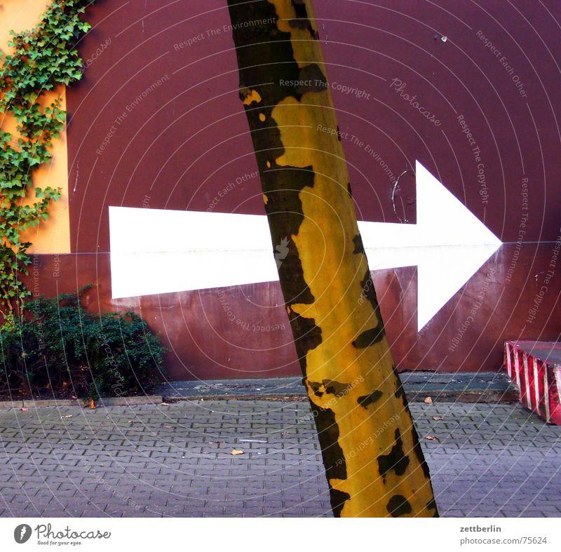 Pfeil Richtung weiß rechts Baum Mauer Fassade Naturwuchs Pflanze Efeu Hinterhof Druckerei Baumstamm Platane Bauernhof gewerbehof pflasterung spezialdruck