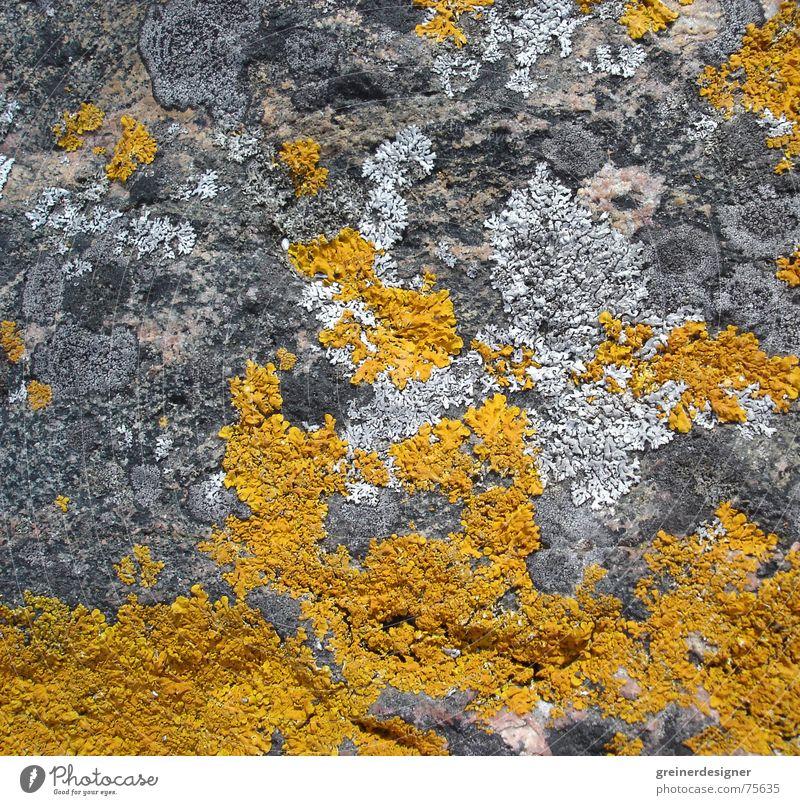 Farbklecks Natur Pflanze gelb Farbe Stein Hintergrundbild Felsen binden