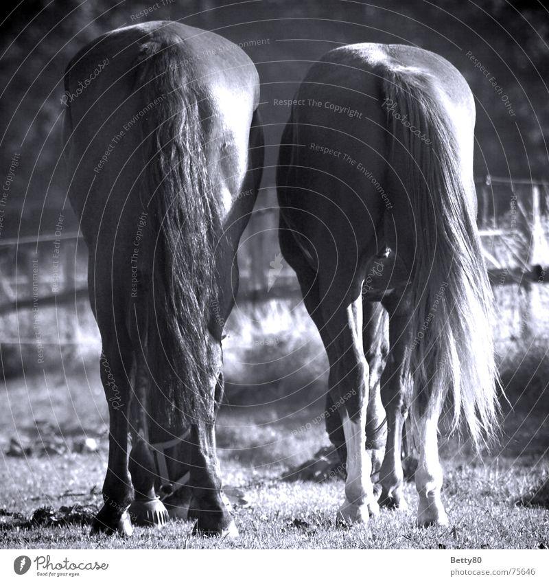 Arschkarte gefällig?! Sommer Ernährung Wiese Haare & Frisuren Pferd Hinterteil Weide Fressen Schwanz vergleichen