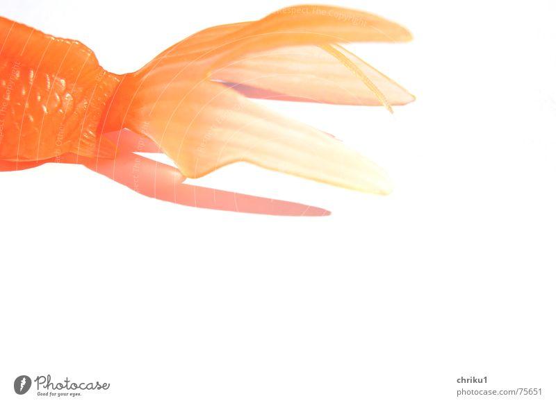 Fischende Goldfisch trocken bewegungslos Außenaufnahme Tier Schwimmhilfe Statue orange plastikfisch Scheune Spielzeug orange hell Langeweile auf dem trockenen