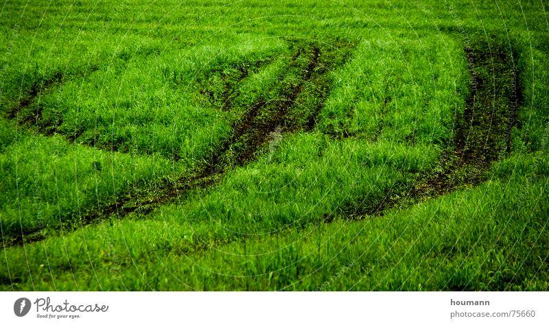 Tractose 2 Physik Muster grün Gras Feld tractor tracks field shadows Wärme Schatten Spuren Traktorspur