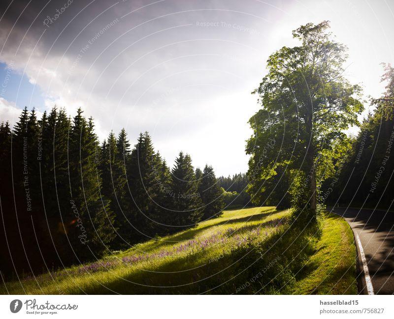road to... Ferien & Urlaub & Reisen grün Sommer Baum Erholung ruhig Ferne Wald Straße Frühling Wiese Zufriedenheit Tourismus Fahrrad Ausflug Abenteuer
