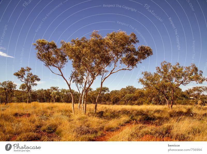 Karijini Himmel Natur Baum Einsamkeit rot Landschaft Tier Erde Sträucher Länder Australien