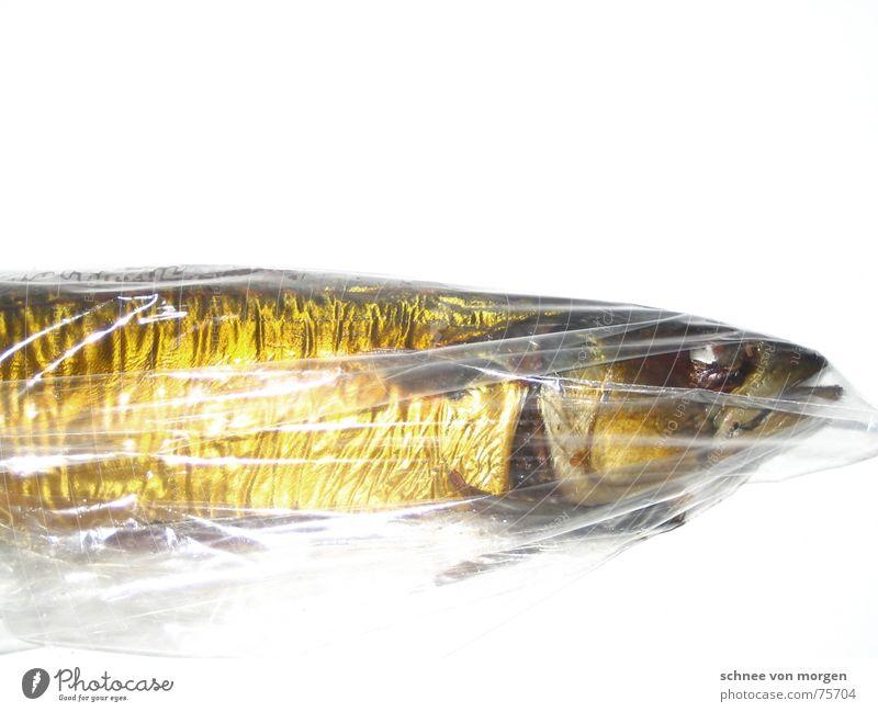 kein wasser Makrele Tod Meer vergangen Kieme gelb glänzend leer Lebensmittel Ernährung Natur Umwelt fish Wasser sea Auge gold ruhig Linie Haut Maul Mund