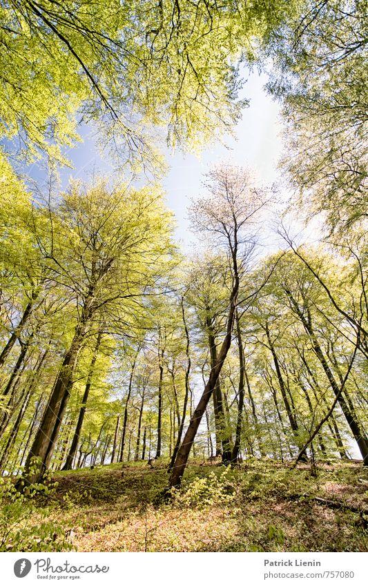 Frühlingswald Himmel Natur Ferien & Urlaub & Reisen grün Farbe Sonne Erholung Landschaft ruhig Ferne Wald Umwelt Leben Freiheit Zufriedenheit