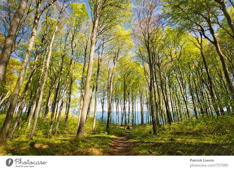 Frühling auf Rügen Natur Ferien & Urlaub & Reisen Pflanze blau Baum Sonne Meer Landschaft Ferne Umwelt Wege & Pfade Bewegung Küste Freiheit Deutschland