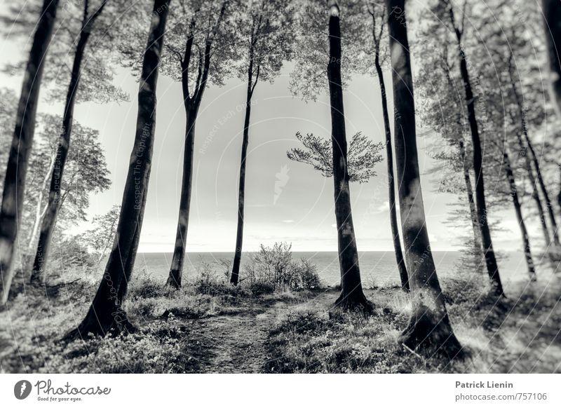 place with a view Umwelt Natur Landschaft Urelemente Luft Wasser Himmel Sommer Wetter Schönes Wetter Pflanze Baum Wald Küste Riff Ostsee Meer Insel