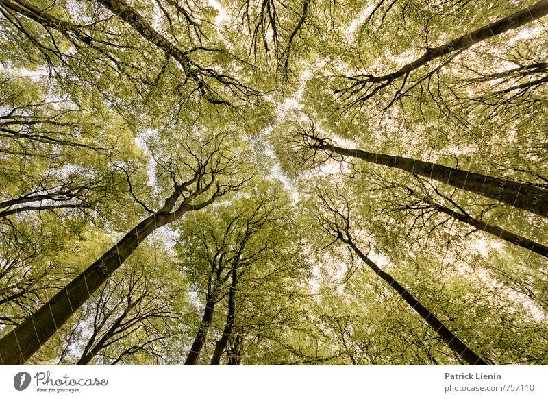don't get any closer Natur Ferien & Urlaub & Reisen Pflanze Sommer Baum Einsamkeit Landschaft Ferne Wald Umwelt Senior Frühling Freiheit Wetter elegant