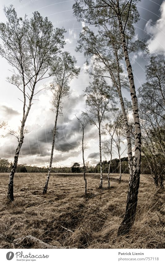 Duvenstedter Brook Umwelt Natur Landschaft Pflanze Urelemente Himmel Wolken Frühling Sommer Schönes Wetter Baum Gras Grünpflanze Wiese Wald Moor Sumpf Energie