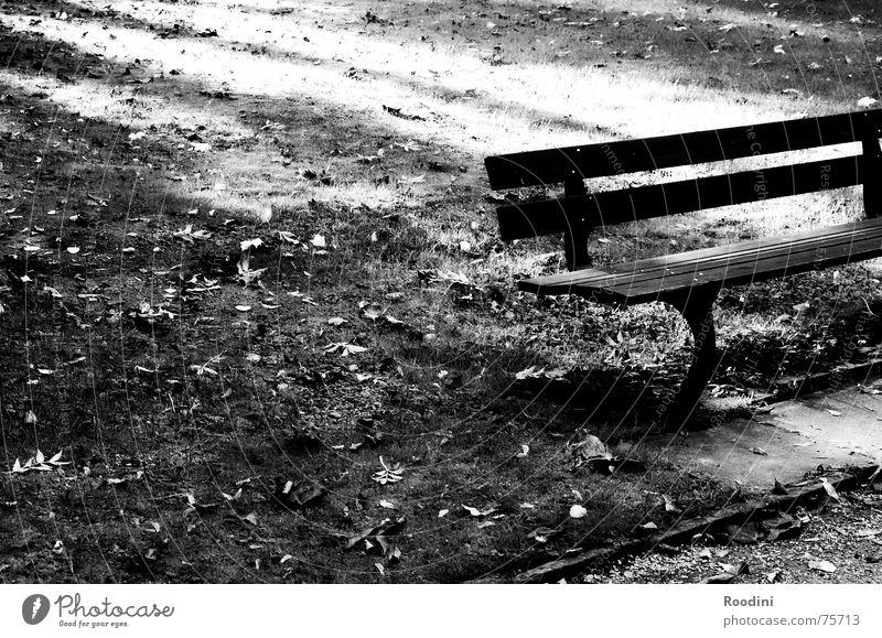 setz dich erstmal... Ferien & Urlaub & Reisen alt Erholung ruhig Herbst Wiese Wege & Pfade Holz Park wandern sitzen laufen warten Ausflug Pause Rasen