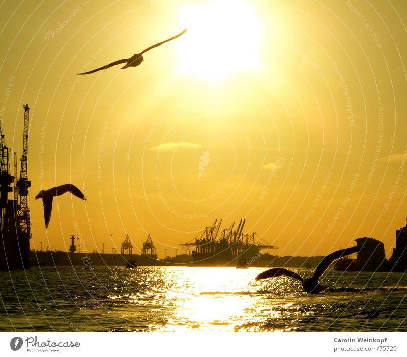 In Hamburg, da bin ich gewesen... Wasser schön Sonne Wolken Traurigkeit Stimmung Wellen 3 Trauer Hafen Abschied Anlegestelle Möwe Kran Abenddämmerung