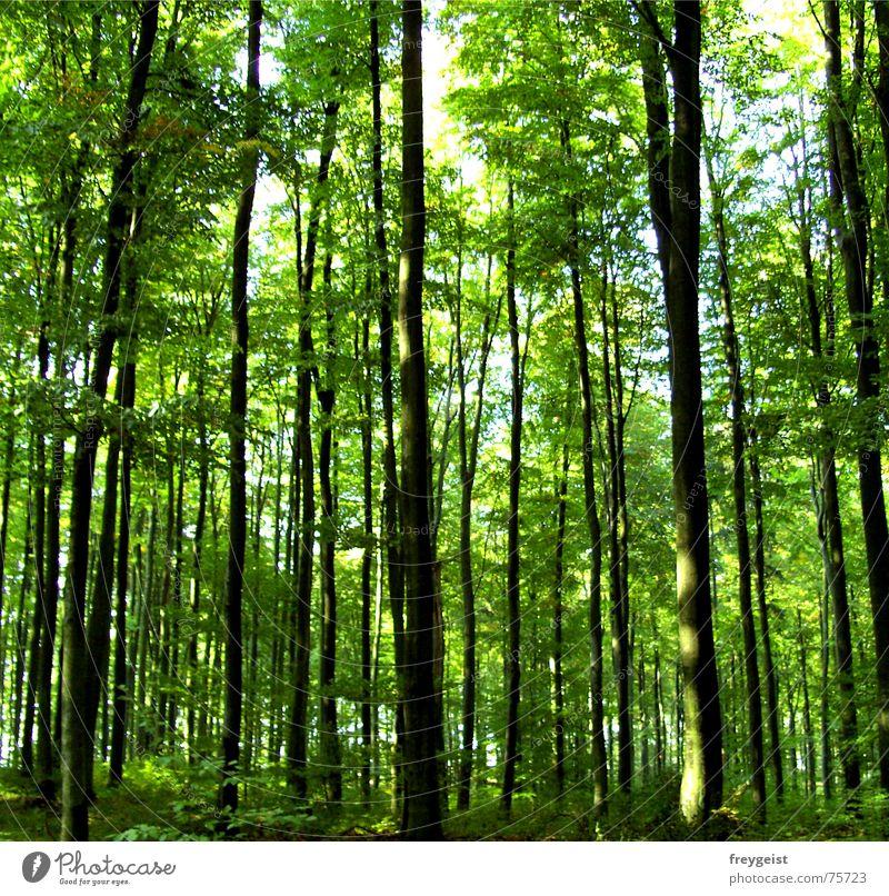Harmony Part 2 harmonisch Zufriedenheit Erholung ruhig Baum Wald grün Idylle tree trees harmony Spaziergang Tag Sonnenstrahlen