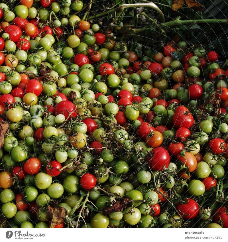 Erntedankfest | die Kehrseite Lebensmittel Gemüse Tomate Strauchtomate Umwelt Natur Pflanze Nutzpflanze beobachten alt authentisch frisch Gesundheit einzigartig