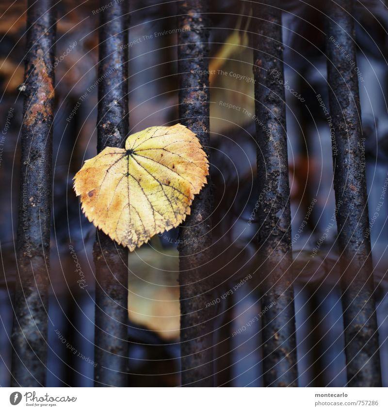 No BB Umwelt Natur Pflanze Blatt Grünpflanze Wildpflanze Grill Grillrost Stahl Rost alt dünn authentisch kalt klein natürlich trist trocken gelb schwarz